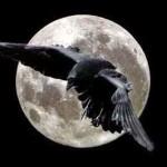 La caduta del corvo