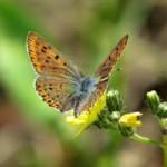 Voce della farfalla che ritornò a volare